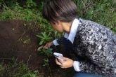 Recuperan plantas en peligro de extinción